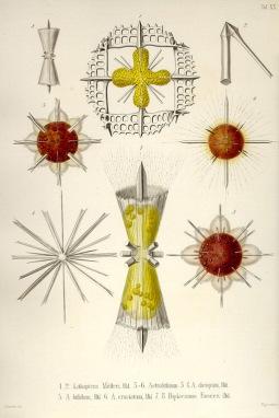 Haeckel plate1